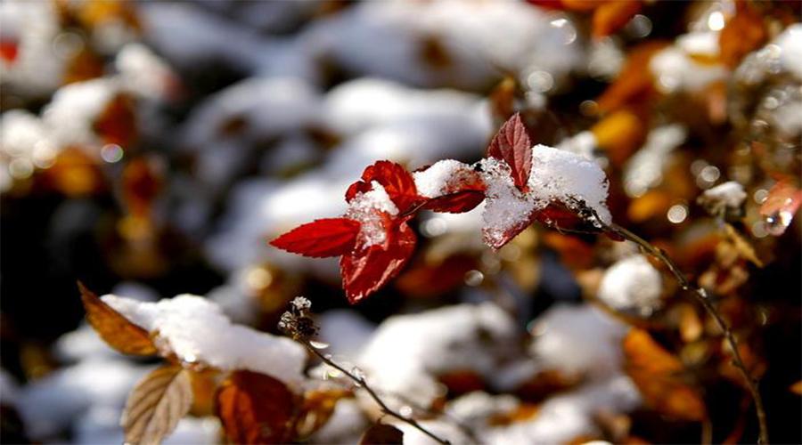 冬天干燥寒冷易生病,跟着小科这样做,轻轻松松过冬天